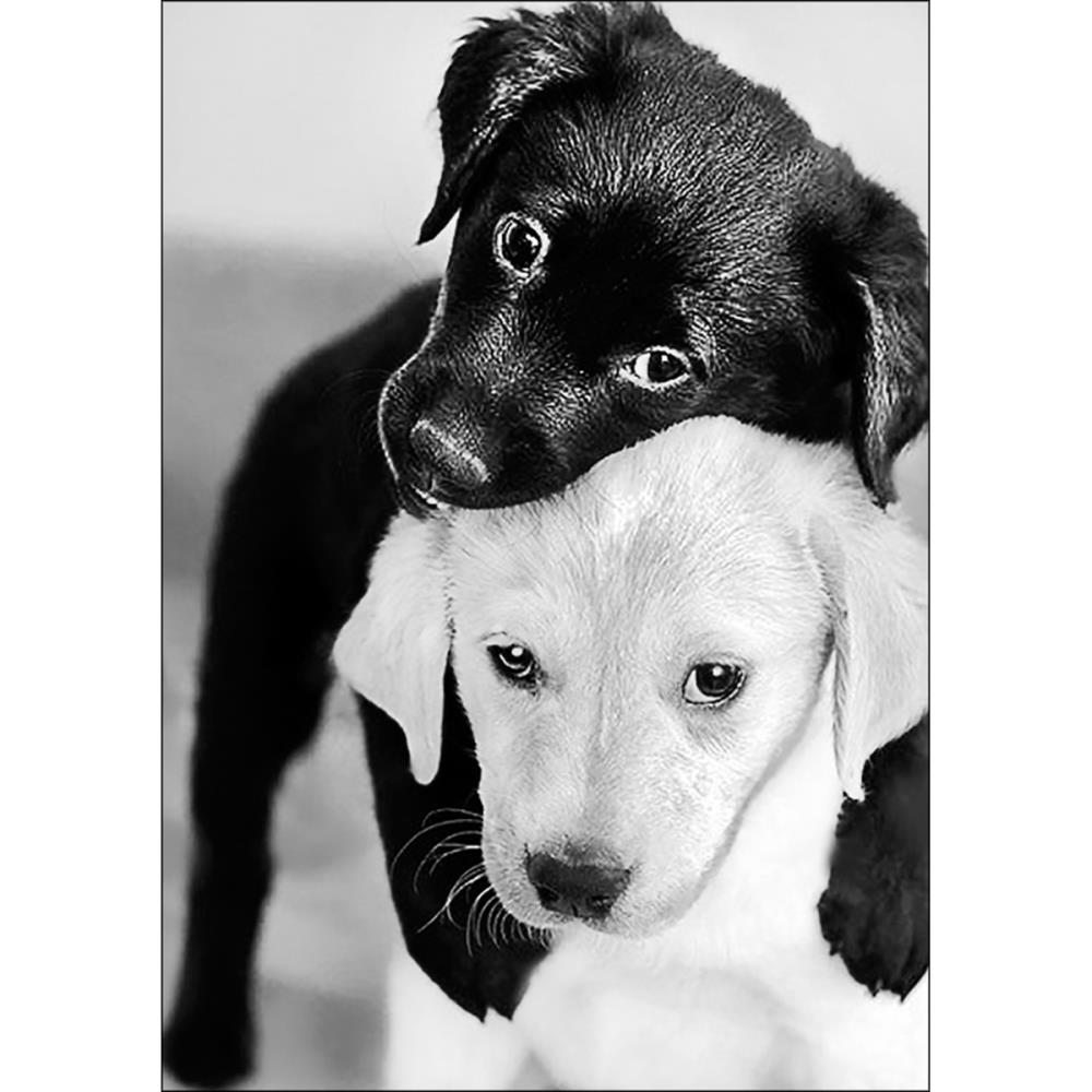 Black and White Puppies Collection d'Art Diamond Embroidery Printed Gem Kit DE453
